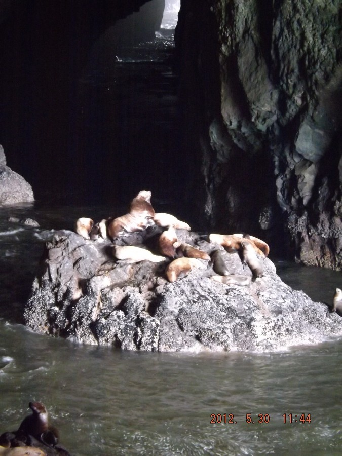 oregon sea lions cave
